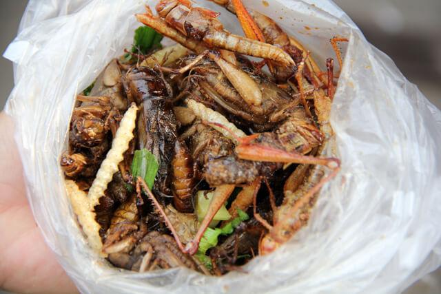 Food in Wilderness - Eating Bugs -